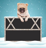 cute pug puppy dog hanging with paws on blank blackboard sign with wooden frame, wearing a knitted hat with pompons, on snowy background