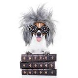 intelligent smart  dog with books