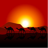 Silhouettes of caravan of camels on desert sunset