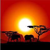 Silhouettes of elephants on African sunset background