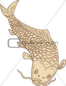 Koi Nishikigoi Carp Diving Down Drawing