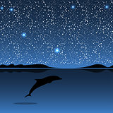 Dolphin sea animal night landscape