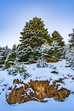 Ziria mountain fir trees covered with snow on a winter day, South Peloponnese, Greece