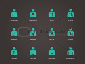 Anatomy Human Systems icons set.