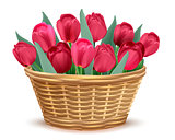 Full wicker basket with red tulips