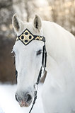 white trotter horse in medieval front bridle-strap outdoor horizontal portrait in winter in sunset