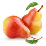 Two sweet red yellow pear fruits