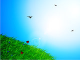 Spring sunny sky and grass background