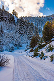 Snow road at Ziria mountain with fir trees covered with snow on a winter day, South Peloponnese, Greece
