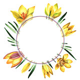 Wildflower crocuses flower frame in a watercolor style isolated.