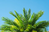 Palmtree leaves