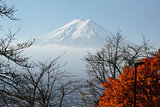 Mt Fuji in autumn season