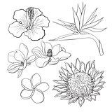 Tropical flowers - hibiscus, protea, plumeria, bird of paradise, magnolia