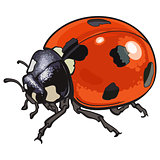 Red ladybug, ladybird with black spots, isolated sketch style illustration