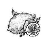 Dotwork Lemon Fruit