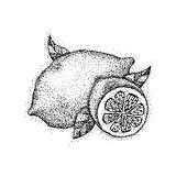 Lemon Fruit Dotwork