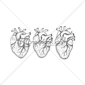 Three Human Hearts Dotwork
