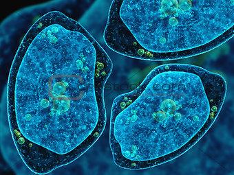 Three amoebas on abstract dark blue background