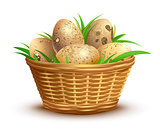 Quail eggs full wicker basket