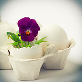 Cute flowers in egg shells for Easter
