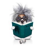 intelligent smart  dog reading a book