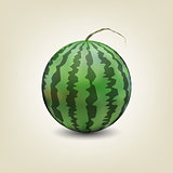 Photo realistic watermelon, vector illustration.