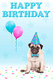 cute grumpy faced pug puppy dog with party hat, balloons, confetti and text happy birthday, on blue background