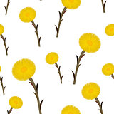 Seamless pattern coltsfoot flowers