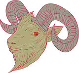 Mountain Goat Ram Head Drawing