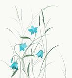 Summer flower campanula