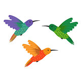 Set three small colorful bird hummingbird