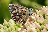Butterfly on a flowering plant