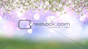 3D Cherry tree on bokeh lights