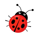 Ladybug vector illustration