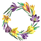 Wildflower crocuses flower wreath in a watercolor style isolated.
