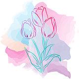 Tulips on watercolor spots