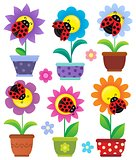 Flowerpots with flowers and ladybugs