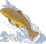 Brown Trout Swimming Up Turbulent Water Drawing
