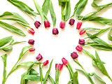 tulips in form of heart shape on white background