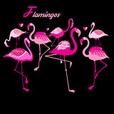 Vector group of flamingos