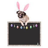 sweet pug puppy dog with bunny ears diadem hanging with paws on blank blackboard sign, with easter decoration, on white background