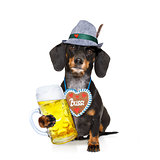 bavarian beer dachshund sausage dog