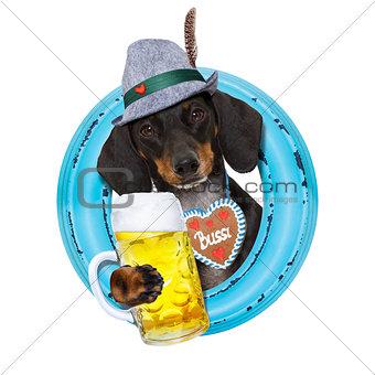 bavarian beer dachshund sausage dog