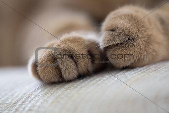 cat paws closeup macro shot