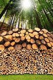 Firewood Logs - Tree Trunks - Forest