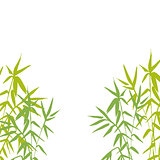 Bamboo plant isolated vector illustration