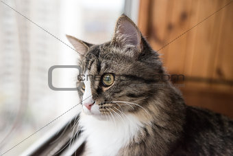 cat looks out the window.