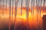 Icicles on the background of the blazing gold sunset.