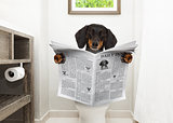 dog on toilet seat reading newspaper