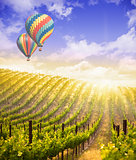 Hot Air Balloons Flying Above Beautiful Green Grape Vineyard